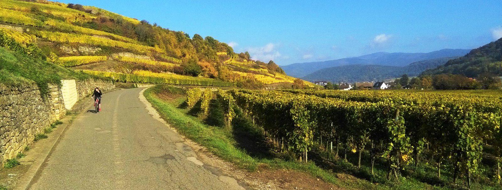 Cykelferie i Alsace fra Strasbourg til Basel